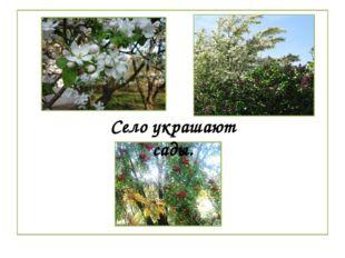 Село украшают сады.