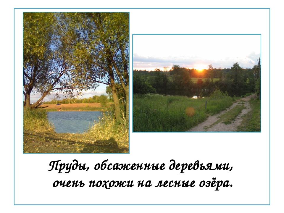 Пруды, обсаженные деревьями, очень похожи на лесные озёра.