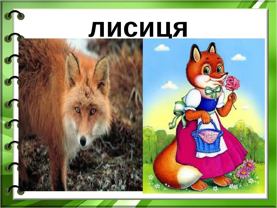 лисиця