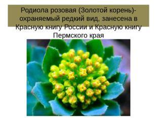 Родиола розовая (Золотой корень)- охраняемый редкий вид, занесена в Красную к