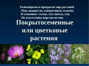 Покрытосеменные или цветковые растения Разнообразен и прекрасен мир растений
