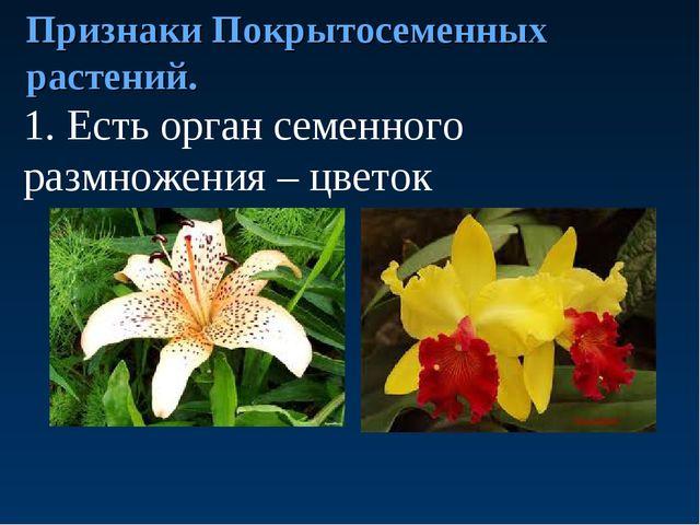 Признаки Покрытосеменных растений. 1. Есть орган семенного размножения – цве...