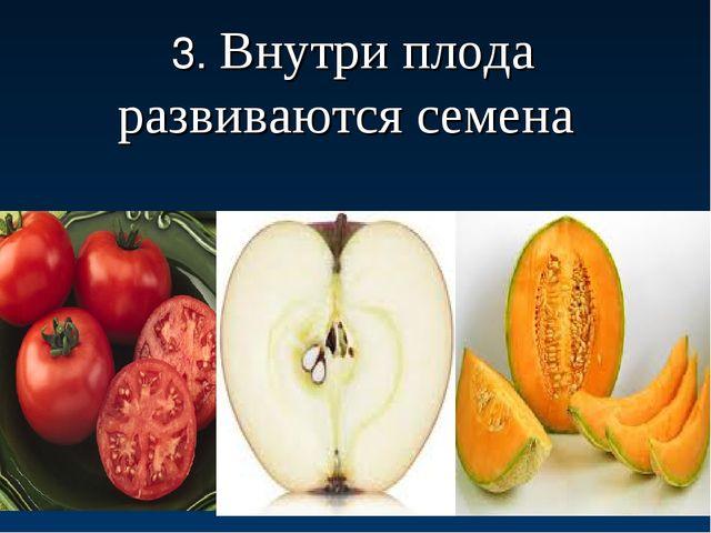 3. Внутри плода развиваются семена