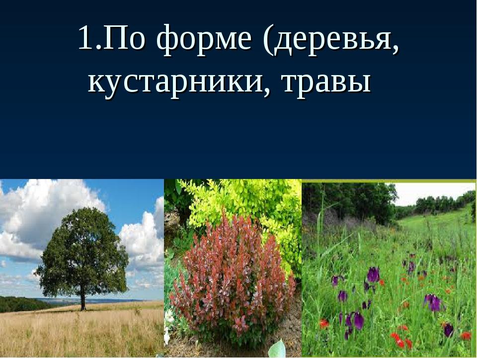 1.По форме (деревья, кустарники, травы