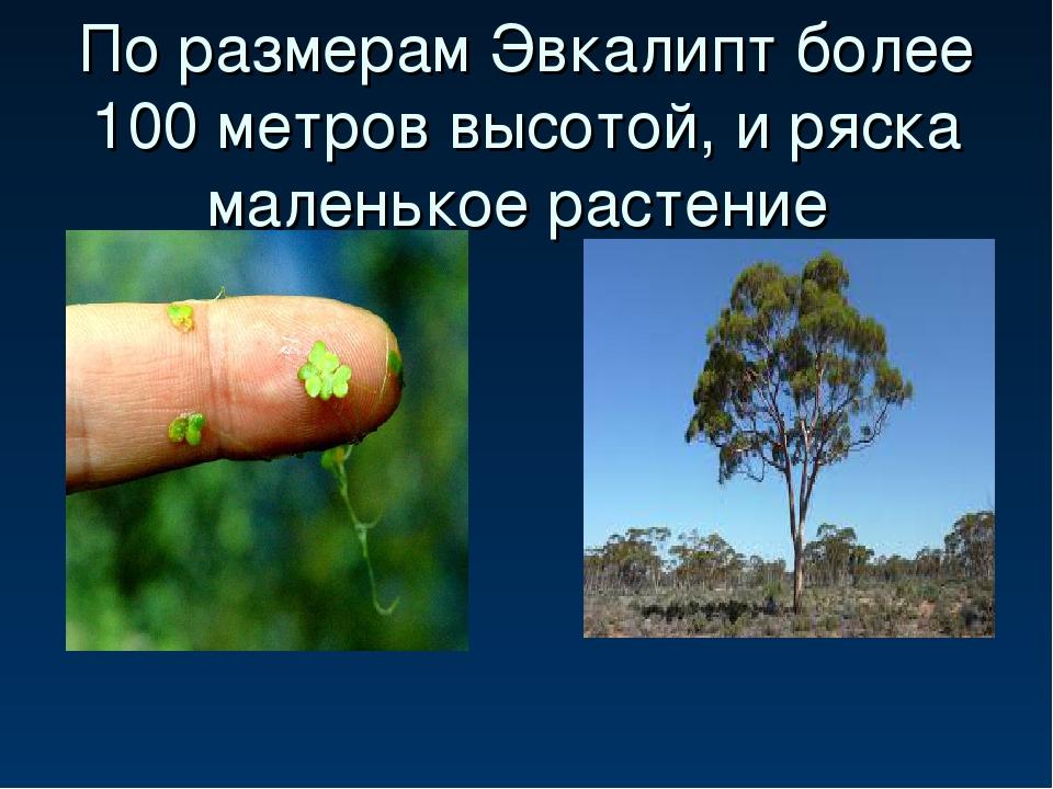 По размерам Эвкалипт более 100 метров высотой, и ряска маленькое растение