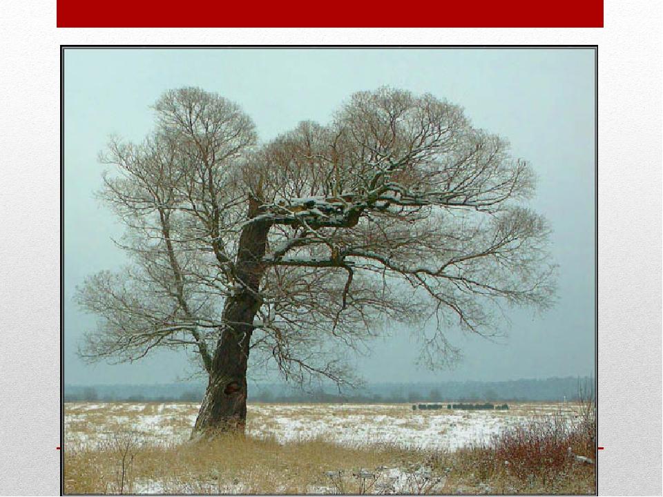 Ноябрь – ворота зимы