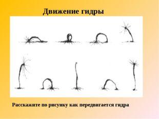 Движение гидры Расскажите по рисунку как передвигается гидра