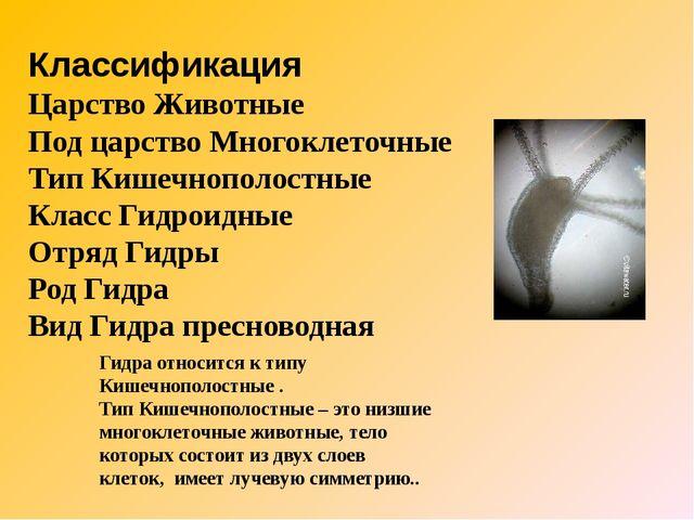 Классификация Царство Животные Под царство Многоклеточные Тип Кишечнополостн...