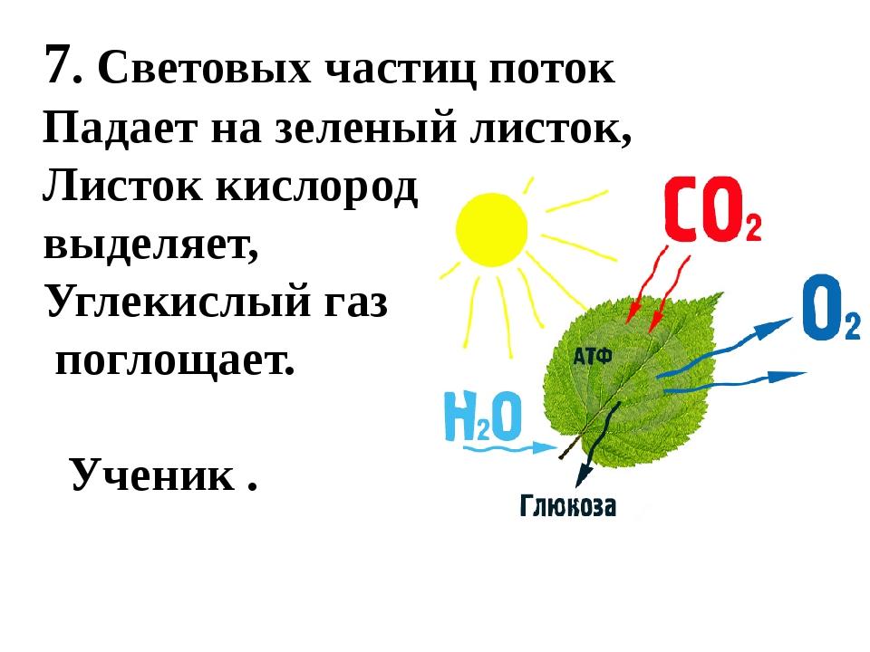7. Световых частиц поток Падает на зеленый листок, Листок кислород выделяет,...