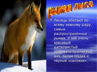 Лисицы обитают по всему земному шару, самые распространённые – рыжие. У них о
