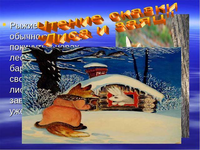 Рыжие лисицы обычно селятся в покинутых норах лесных сурков и барсуков. Но ес...