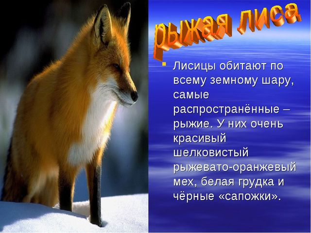 Лисицы обитают по всему земному шару, самые распространённые – рыжие. У них о...