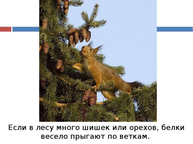 Если в лесу много шишек или орехов, белки весело прыгают по веткам.