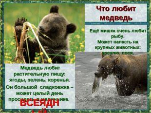 Медведь любит растительную пищу: ягоды, зелень, коренья. Он большой сладкоеж