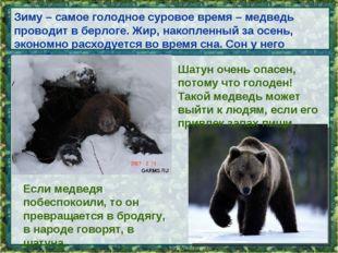 Зиму – самое голодное суровое время – медведь проводит в берлоге. Жир, накопл