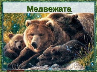 * Весят новорожденные медвежата 500 граммов. Большую часть времени они спят и