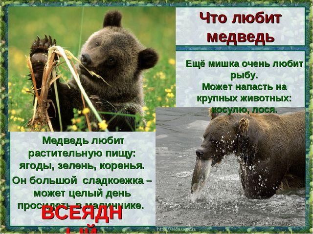 Медведь любит растительную пищу: ягоды, зелень, коренья. Он большой сладкоеж...