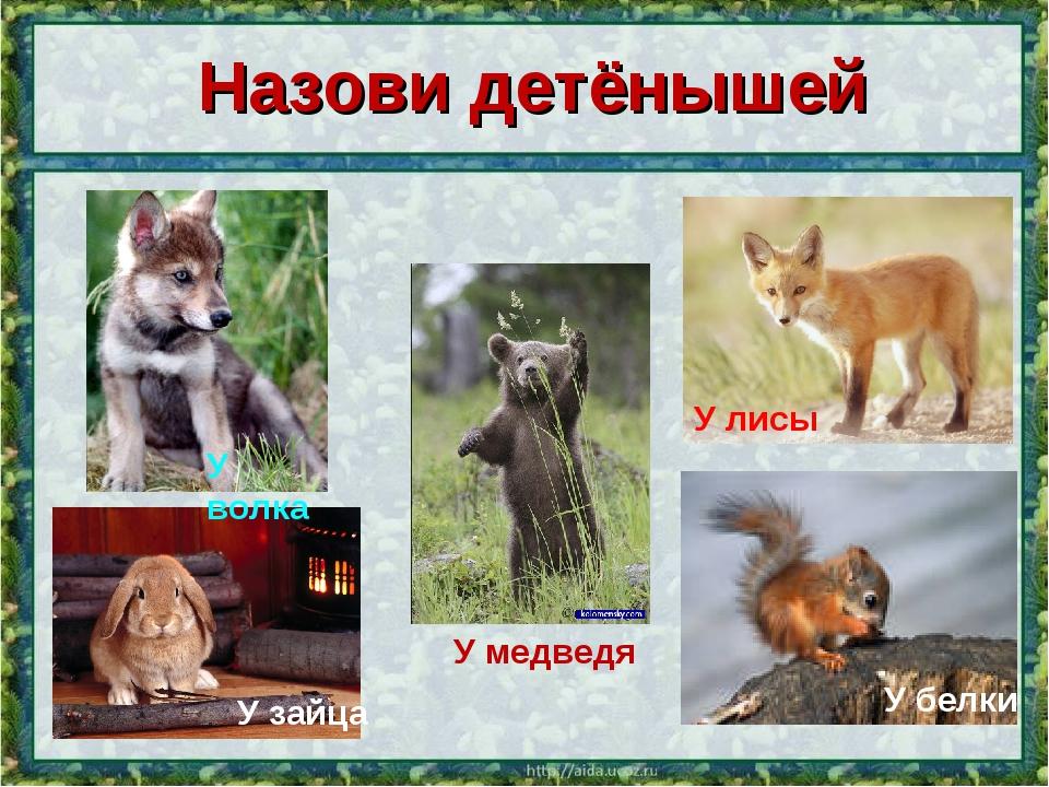 Назови детёнышей У волка У медведя У лисы У белки У зайца