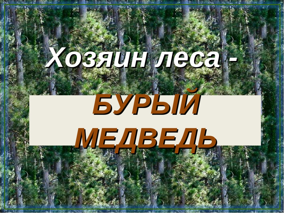 БУРЫЙ МЕДВЕДЬ Хозяин леса -