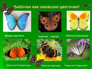 Бабочки как ожившие цветочки! Морфо аматонте Бабочка – павлин Бабочка Клеопат