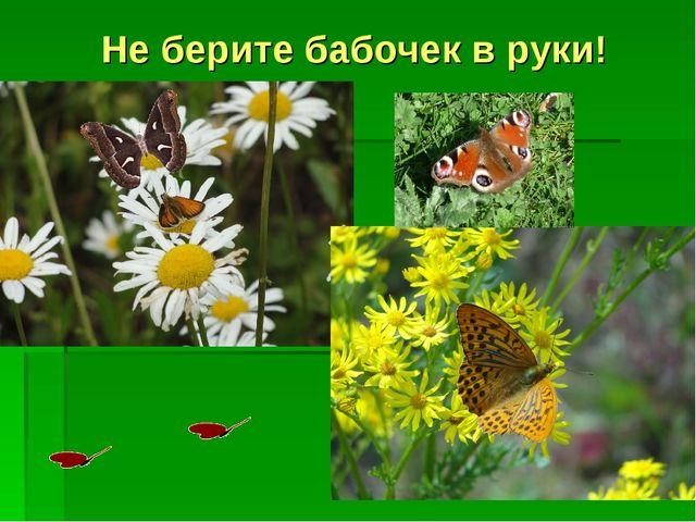 Не берите бабочек в руки!