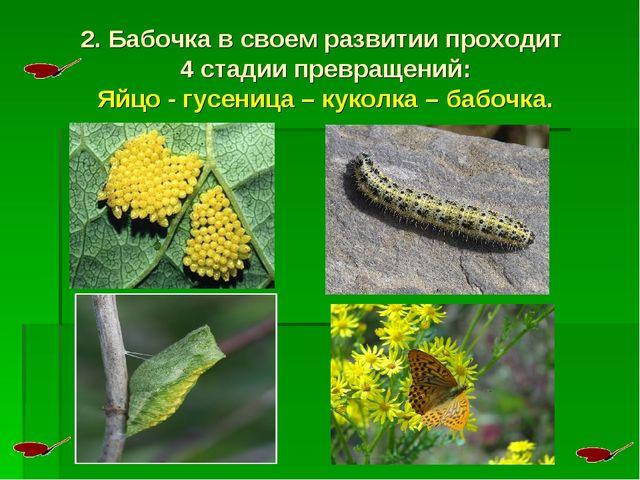 2. Бабочка в своем развитии проходит 4 стадии превращений: Яйцо - гусеница –...