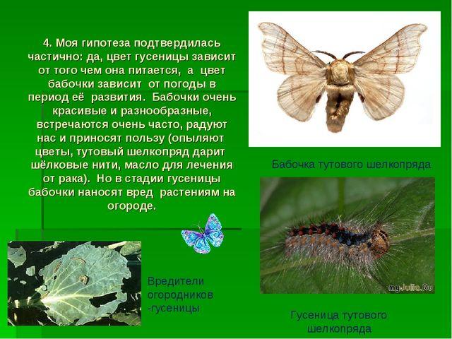 4. Моя гипотеза подтвердилась частично: да, цвет гусеницы зависит от того че...
