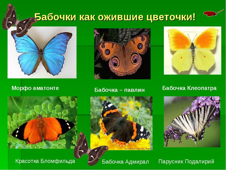 Бабочки как ожившие цветочки! Морфо аматонте Бабочка – павлин Бабочка Клеопат...