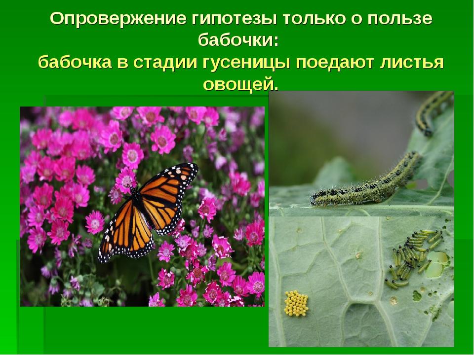 Опровержение гипотезы только о пользе бабочки: бабочка в стадии гусеницы поед...