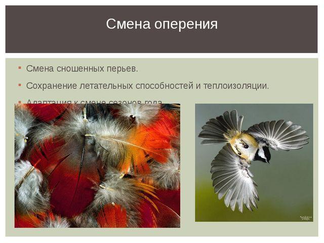 Смена сношенных перьев. Сохранение летательных способностей и теплоизоляции....