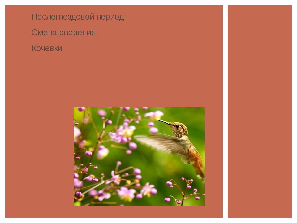 Послегнездовой период: Смена оперения; Кочевки.