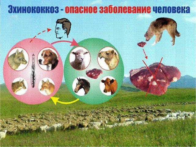 Презентация по МДК 01. 01. 04 Паразитология и инвазионные болезни ...