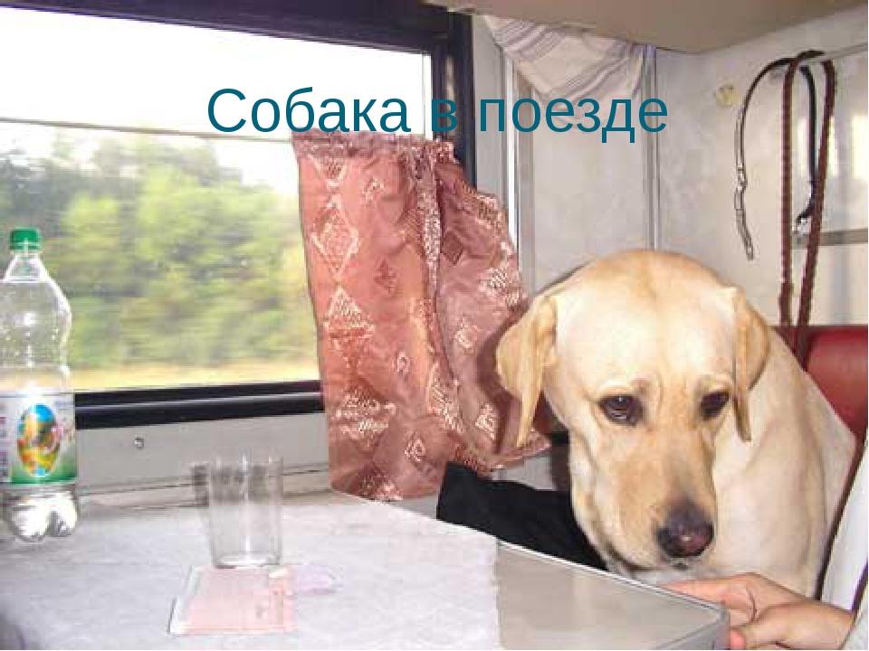 Собака в поезде