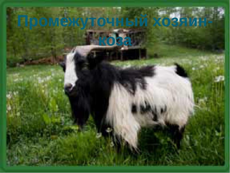 Промежуточный хозяин-коза