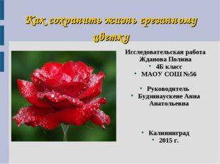 Как сохранить жизнь срезанному цветку Исследовательская работа Жданова Полина