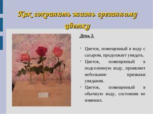 Как сохранить жизнь срезанному цветку День 3. Цветок, помещенный в воду с сах