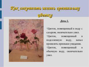 Как сохранить жизнь срезанному цветку День 5. Цветок, помещенный в воду с сах