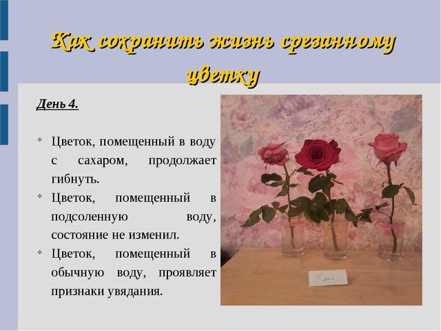 Как сохранить жизнь срезанному цветку День 4. Цветок, помещенный в воду с сах...
