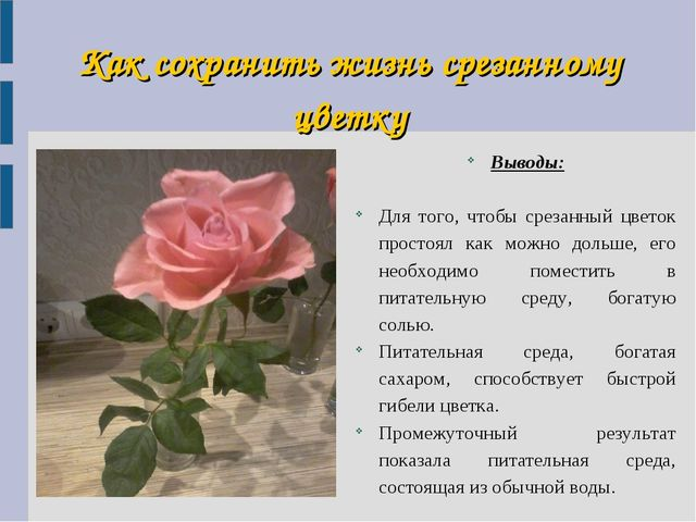 Как сохранить жизнь срезанному цветку Выводы: Для того, чтобы срезанный цвето...