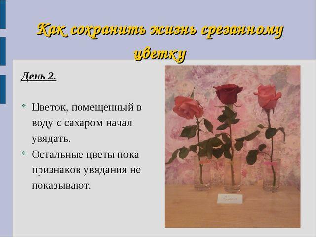 Как сохранить жизнь срезанному цветку День 2. Цветок, помещенный в воду с сах...
