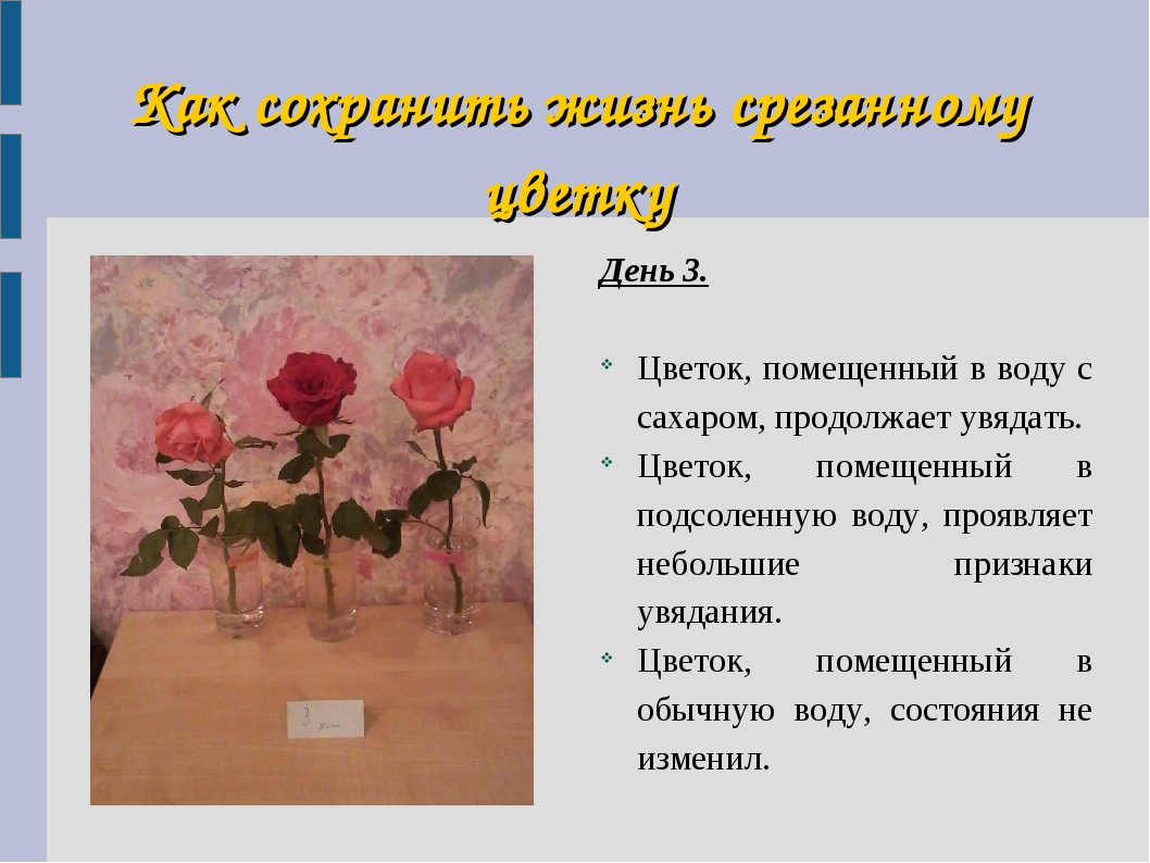 Как сохранить жизнь срезанному цветку День 3. Цветок, помещенный в воду с сах...