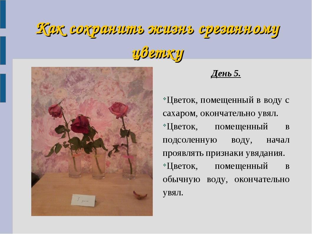 Как сохранить жизнь срезанному цветку День 5. Цветок, помещенный в воду с сах...
