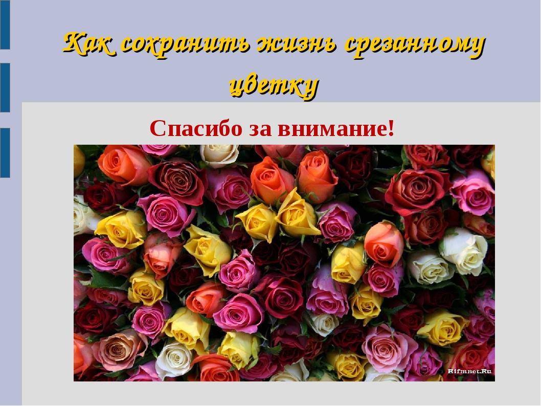 Как сохранить жизнь срезанному цветку Спасибо за внимание!