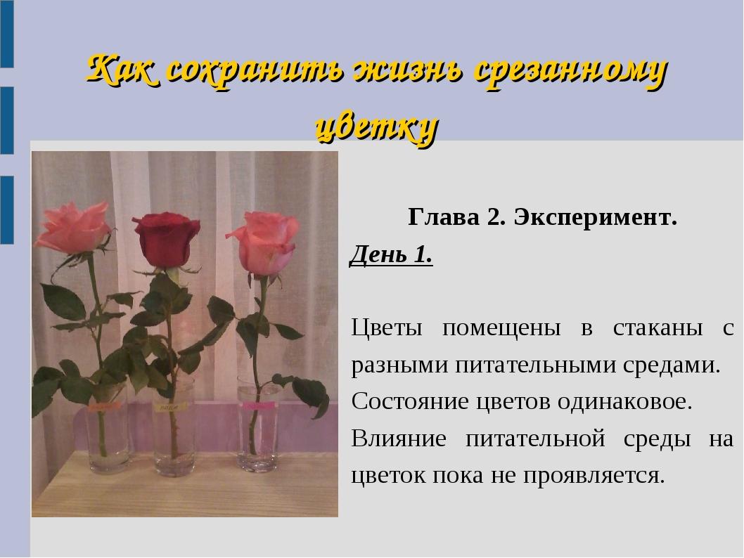Как сохранить жизнь срезанному цветку Глава 2. Эксперимент. День 1. Цветы пом...