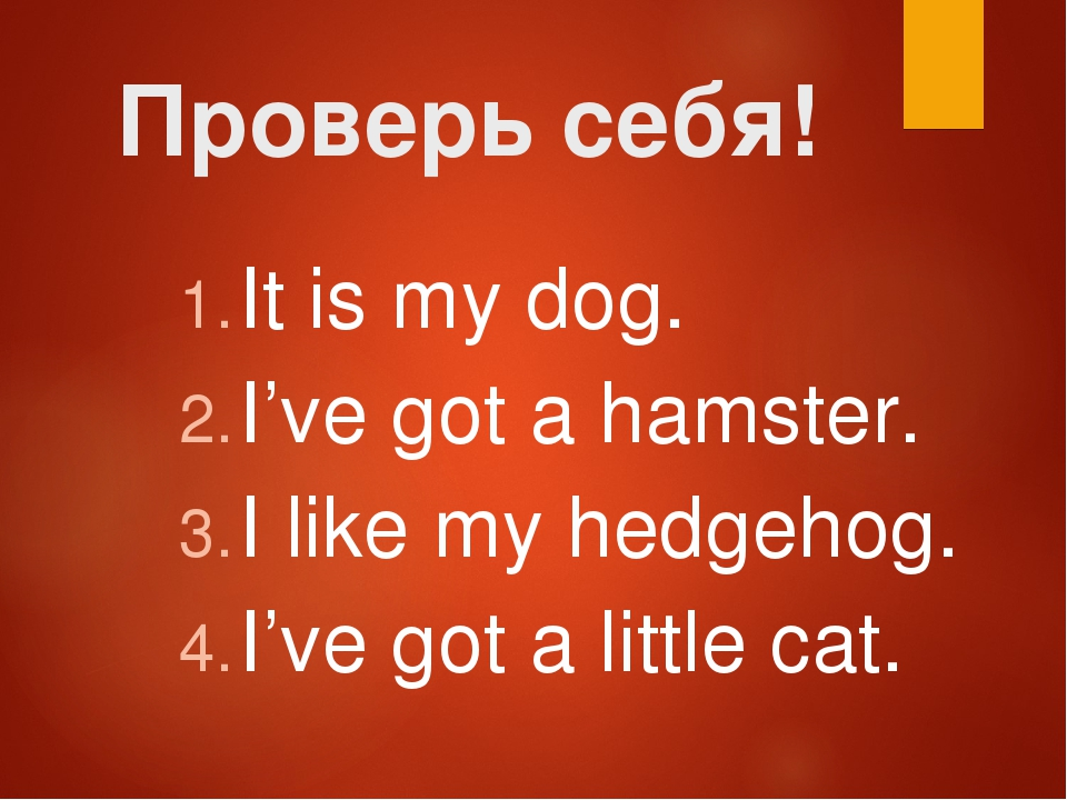 Проверь себя! It is my dog. I've got a hamster. I like my hedgehog. I've got...