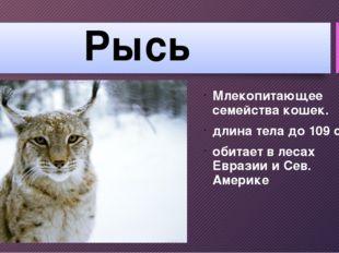 Рысь Млекопитающее семейства кошек. длина тела до 109 см обитает в лесах Евра