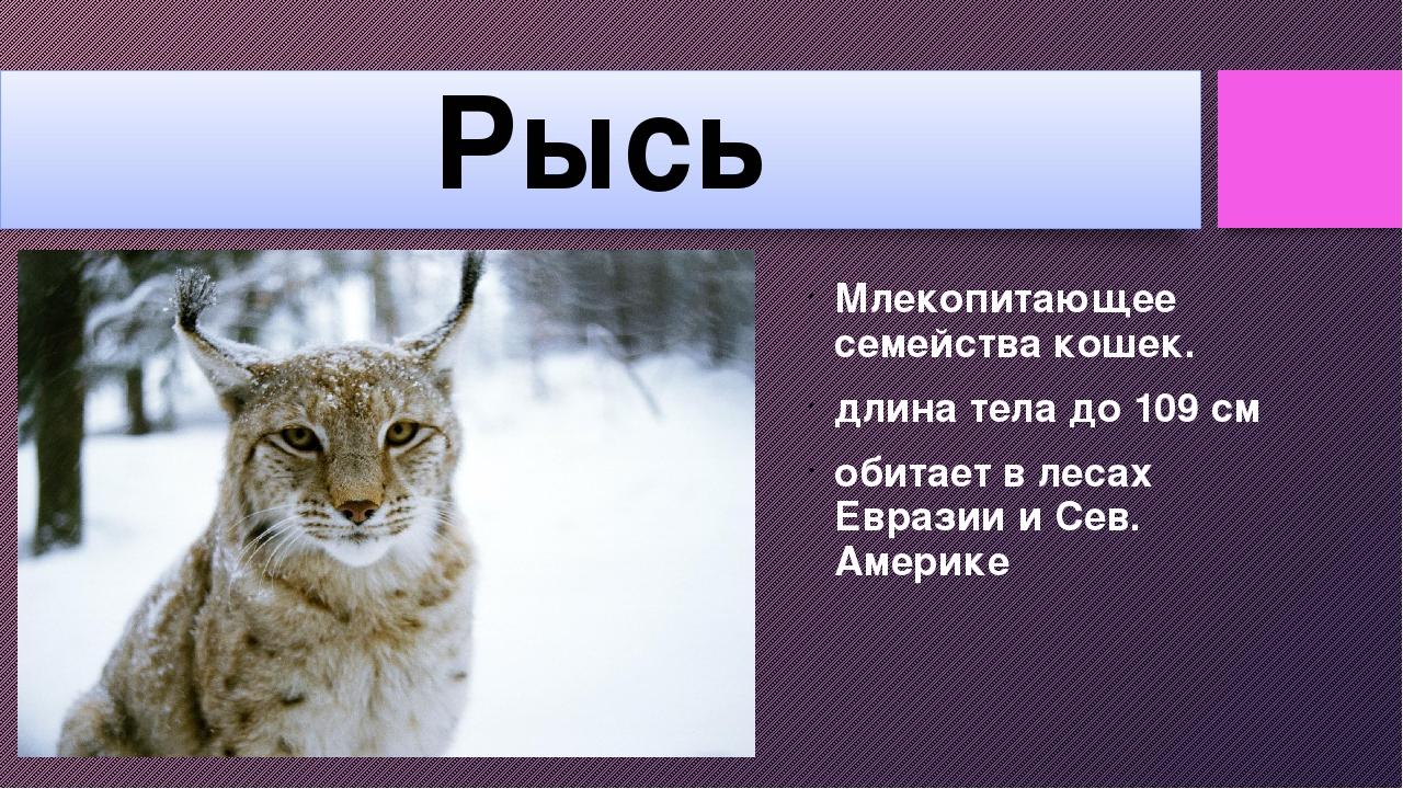 Рысь Млекопитающее семейства кошек. длина тела до 109 см обитает в лесах Евра...