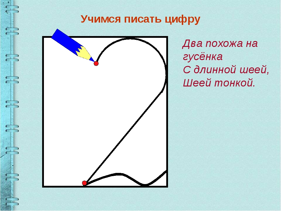 Учимся писать цифру Два похожа на гусёнка С длинной шеей, Шеей тонкой.