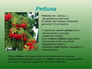 Рябина Ряби́на (лат. Sórbus)— род древесных растений из семейства Розовые (R