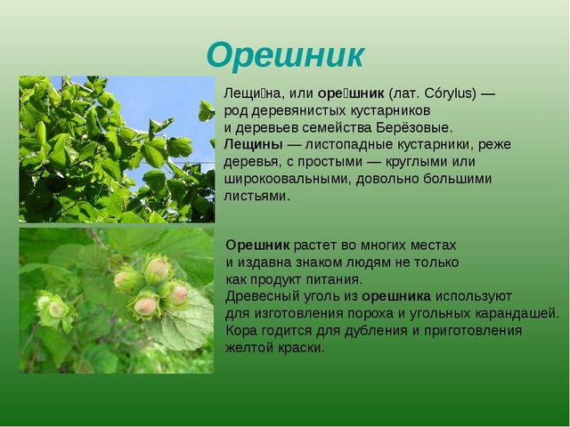 Орешник Лещи́на, или оре́шник (лат. Córylus)— род деревянистых кустарников и...